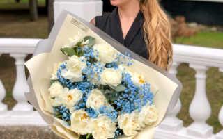 3252 Бесплатные фото Живые Цветы